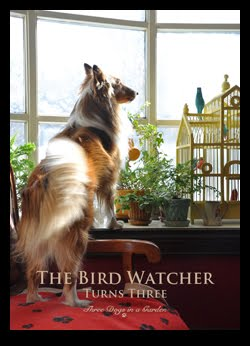The Birdwatcher Turns Three Years Old