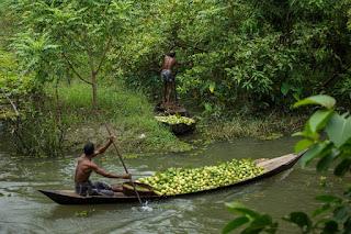Guava piaci Bangladesben