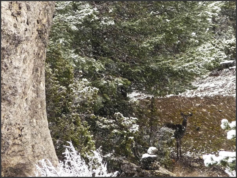 Bajo el Cerro Gamelloncillos