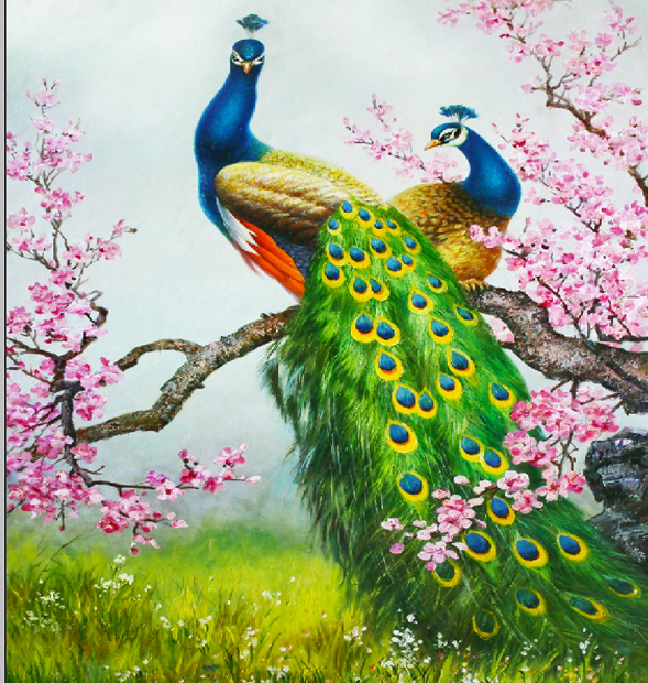 Vector Tranh chim Công