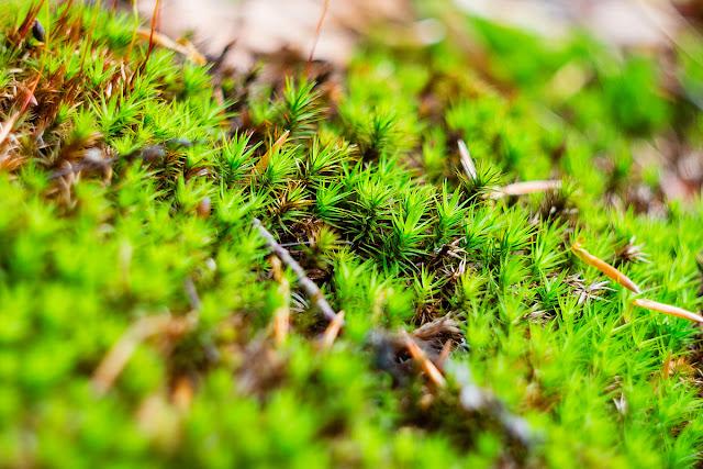nature, moss, Карпаты, Буковель, горы, лес, природа, май, Украина, природа, погода, путешествия