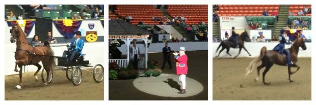 New England Fall Events_The Big E_Agriculture_4H_Coliseum_Horse Pleasure Class