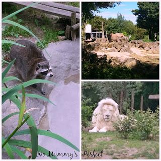 Lion blanc raton laveur éléphant