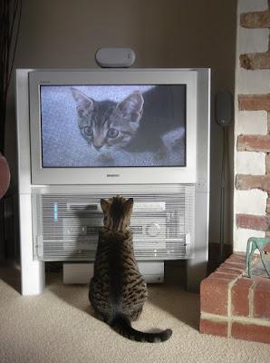http://tegal-online.blogspot.co.id/2011/01/momen-momen-saat-kucing-menonton-kucing.html