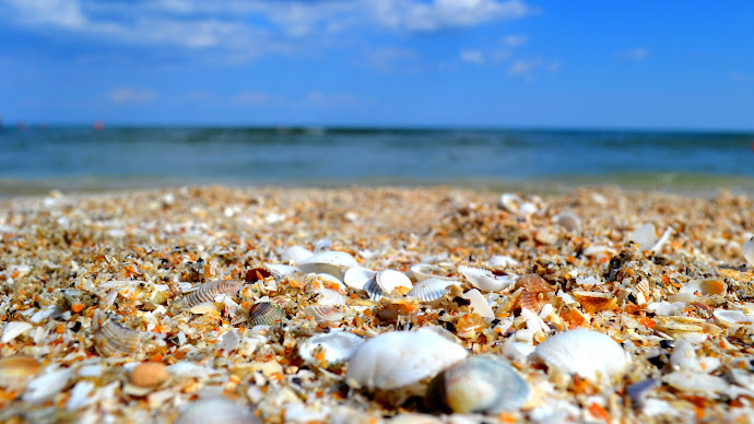 Wallpaper: Beach Full of Shells