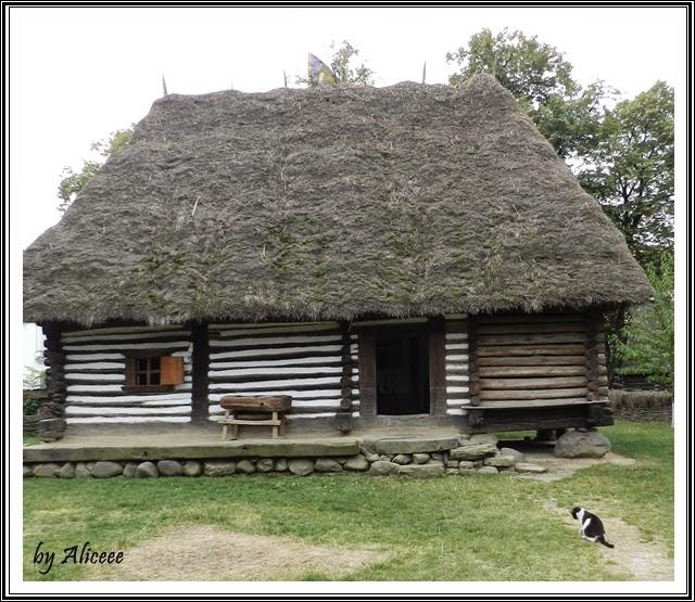 muzeul-satului-bucuresti-pisici