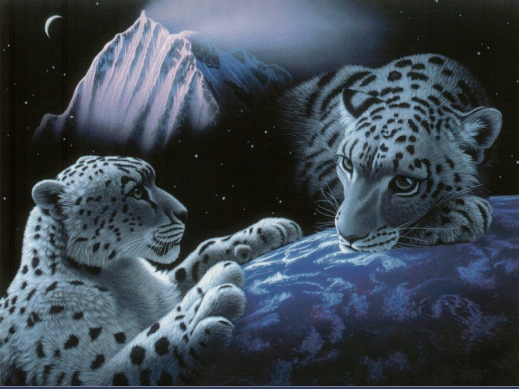 Very Funny Wallpapers With Quotes Amazing White Tiger Wallpaper Wallpaper Amp Pictures