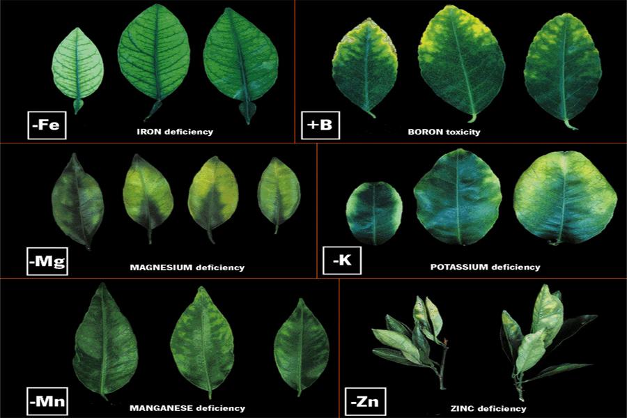 Αποτέλεσμα εικόνας για Ρόλος θρεπτικών στοιχείων στα φυτά