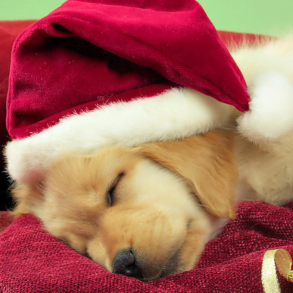 IPad Wallpapers: Free Download Christmas Pets IPad