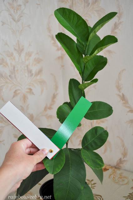 А листья растений - зелёный