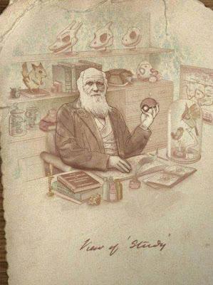 el profesor pokemon darwin
