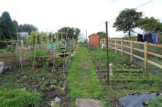 Garden, life on pig row