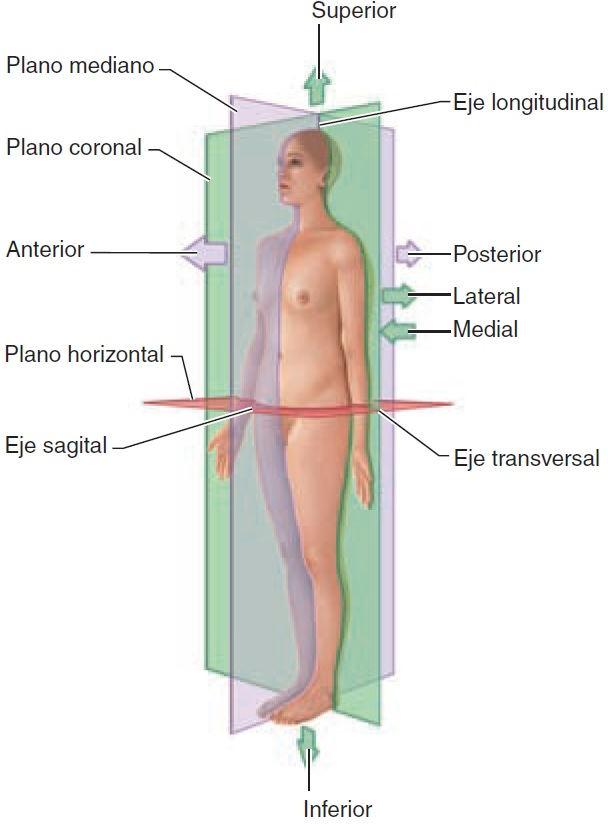 Anatomia y Fisiologia: 2016