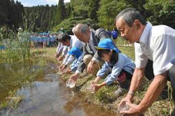 イタセンパラ300匹を保護池に放流