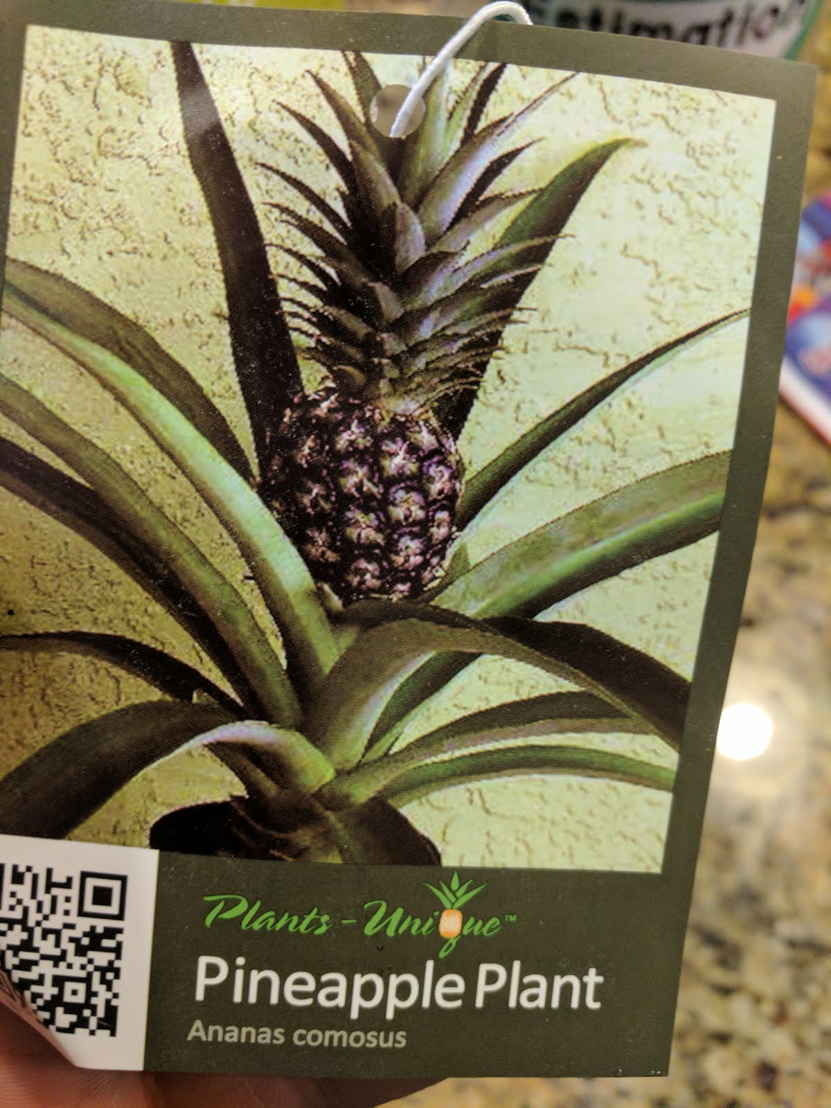 Growing A Pineapple Plant - Giving It A Try At Home