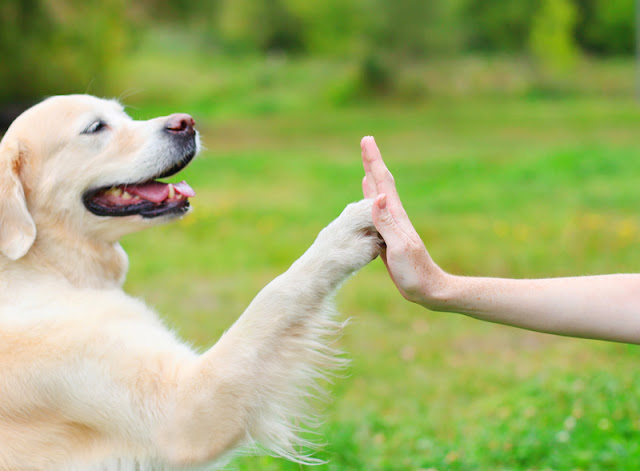 How to counter misinformation about dog training, and the  importance of spreading good quality information. Photo shows dog hi-fiveing a person.