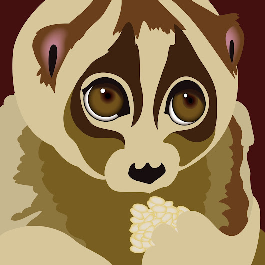 Illustration: Slow Loris