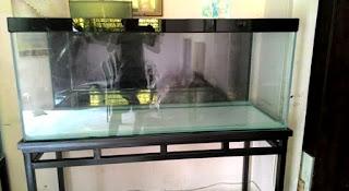 ukuran aquarium arwana yang baik