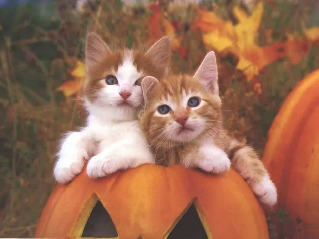 Free wallpapers download desktop nature bollywood sports - Free wallpaper of kittens ...