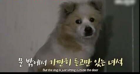 Chú chó hoang chờ đợi tình thương hơi ấm của người qua đường
