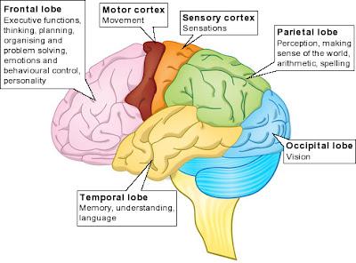 zainal mutakin Anatomi dan Fisiologi Sistem Saraf