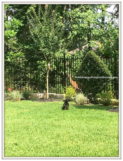 Suburban Farmhouse Backyard- Deer-Nature Reserve-Mini Doxie-From My Front Porch To Yours