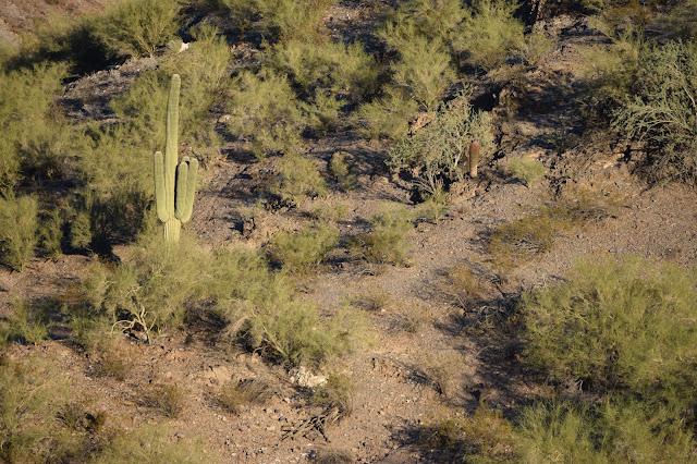 Dreamy Draw Recreation Area, Phoenix, hiking