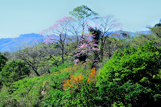 Tree Flower Color in Valley
