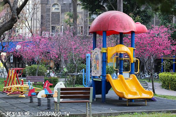 《台中.南區》福順公園-社區櫻花公園,數十棵八重櫻、枝垂櫻,形成小型櫻花林