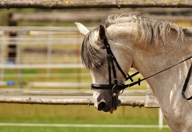 Jak wyprostować konia?