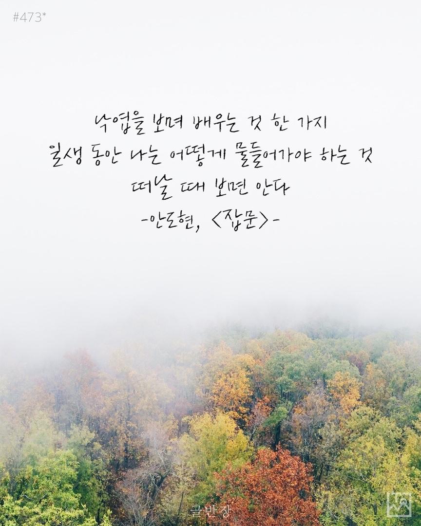 낙엽을 보며 배우는 것 한 가지 - 안도현, <잡문>
