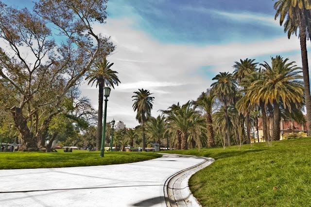 Camino entre palmeras