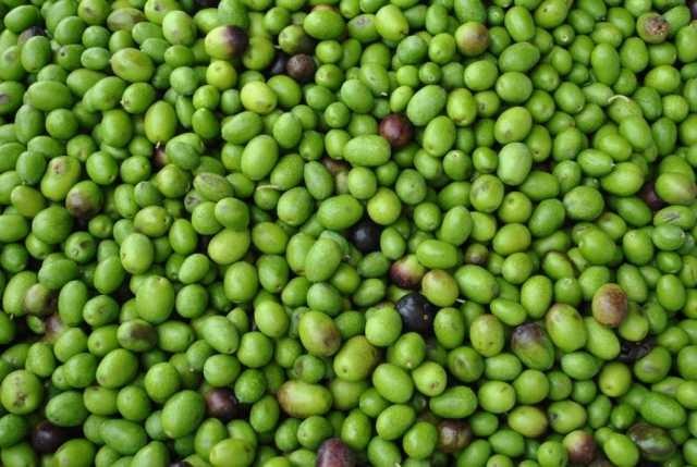case noccioli d'oliva