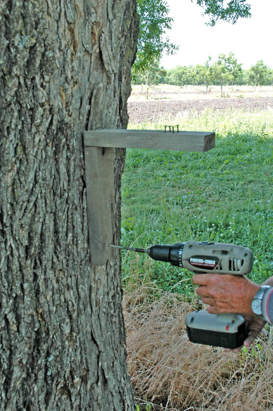 Northern Pecans Setting Squirrel Traps