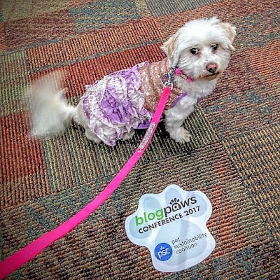 Phoebe looks adorable in her sparkly new Happy Hour dress at the BlogPaws bloggers conference