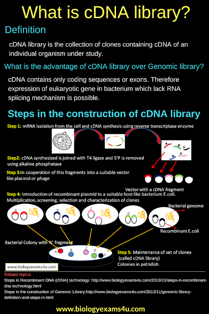 cDNA library: Definition and Steps in the construction of cDNA library