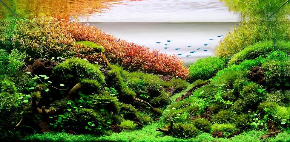 ide Jenis-Jenis Ikan air tawar penghuni Aquascape