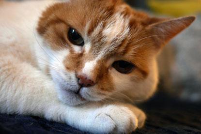 In memory of senior cat Toby