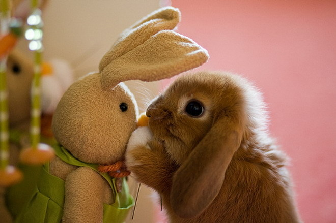 bunnies cute bunny easter duckling cats baby rabbit kissing rabbits animals super adorable happy bunnys kiss cutest animal sweet pound