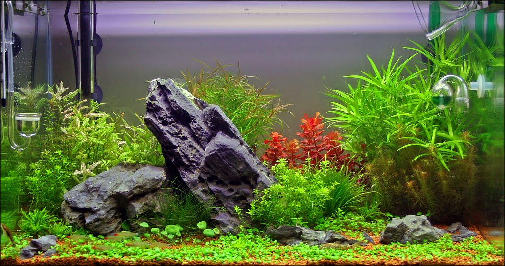 Beautiful Live Plants For Nature Aquariums   Aquascape Aquarium   Freshwater Aquarium  Plants For Beginners
