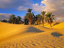 Saharan oasis in Tunisia
