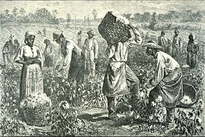 Resultado de imagen de plantación de algodon en georgia