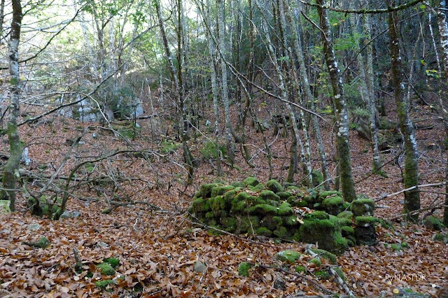 Corripa - Bosque del Silencio