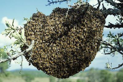 Όταν η μέλισσα γίνετε έμμονη ιδέα!!!