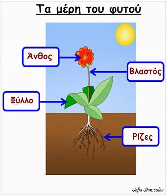 Τι μαθαίνουν τα πρωτάκια; : Τα μέρη του φυτού