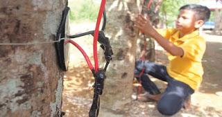 Setelah 80 Kali Uji Coba, Siswa MTs ini Temukan Sumber Energi Listrik dari Pohon