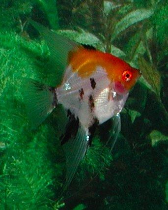 Shamudra Bilash Parrot Amp Angel Fish