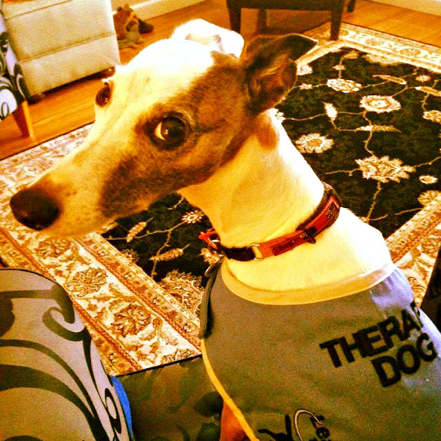 Animal assisted psychotherapy|whippet