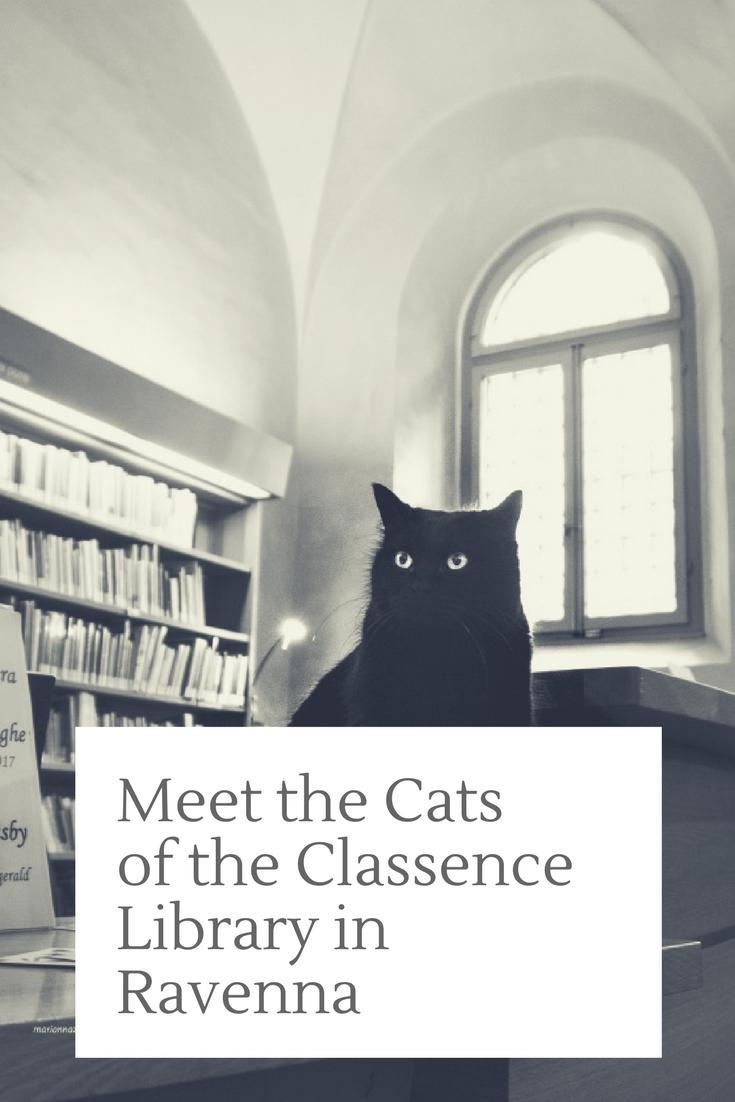 cats classence library ravenna italy