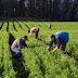 URGENTE: Veja se você está na lista de beneficiários do Garantia Safra que devem comparecer à Secretaria de Agricultura e Meio Ambiente de Mairi